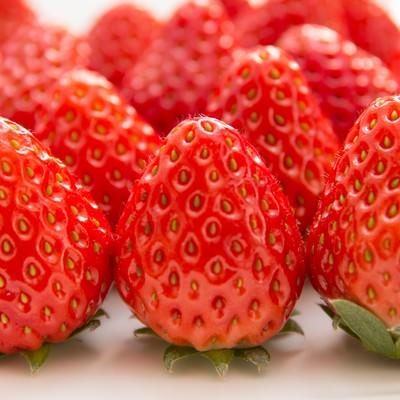 「並べられた苺」の写真素材