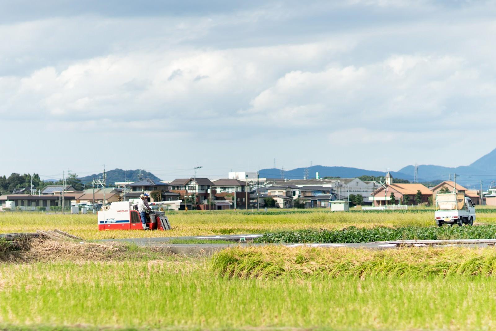 「稲の収穫時期(福岡県大刀洗町)稲の収穫時期(福岡県大刀洗町)」のフリー写真素材を拡大