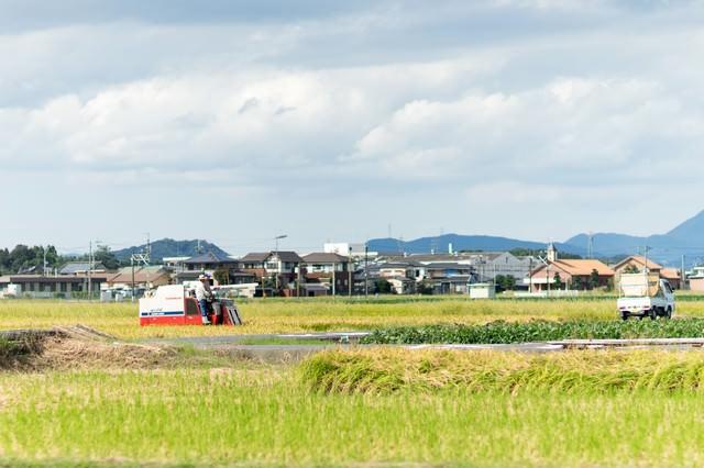稲の収穫時期(福岡県大刀洗町)の写真