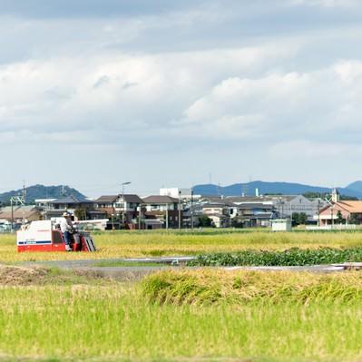「稲の収穫時期(福岡県大刀洗町)」の写真素材