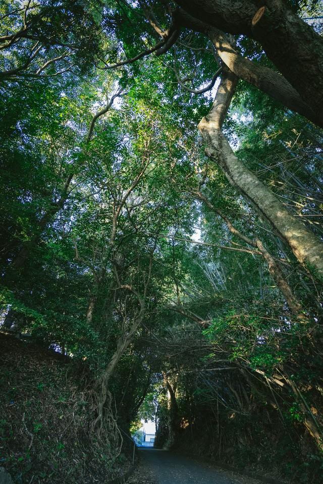 神様が宿る森(福岡県大刀洗の甲条神社前の森)の写真