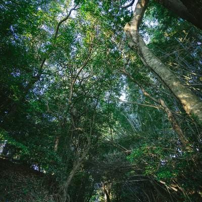 「神様が宿る森(福岡県大刀洗の甲条神社前の森)」の写真素材