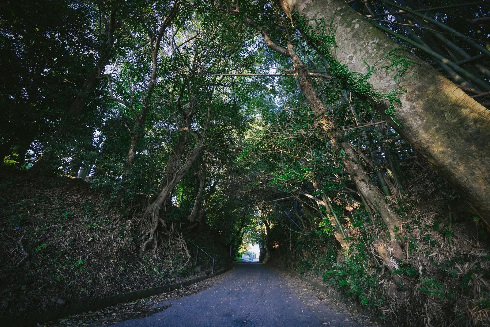 「福岡県大刀洗の甲条神社前の森福岡県大刀洗の甲条神社前の森」のフリー写真素材を拡大