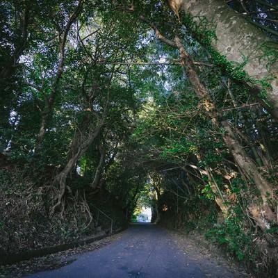 「福岡県大刀洗の甲条神社前の森」の写真素材