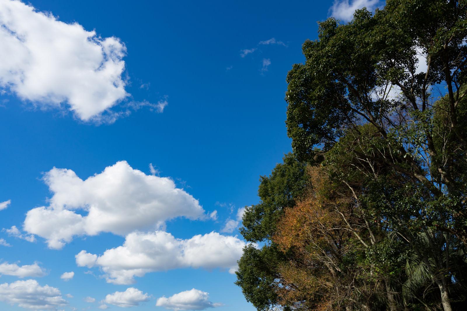 「青空と樹木」の写真