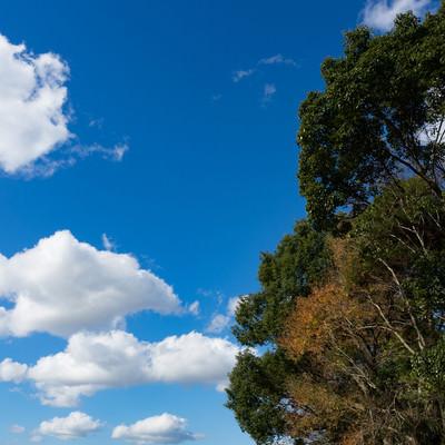 青空と樹木の写真