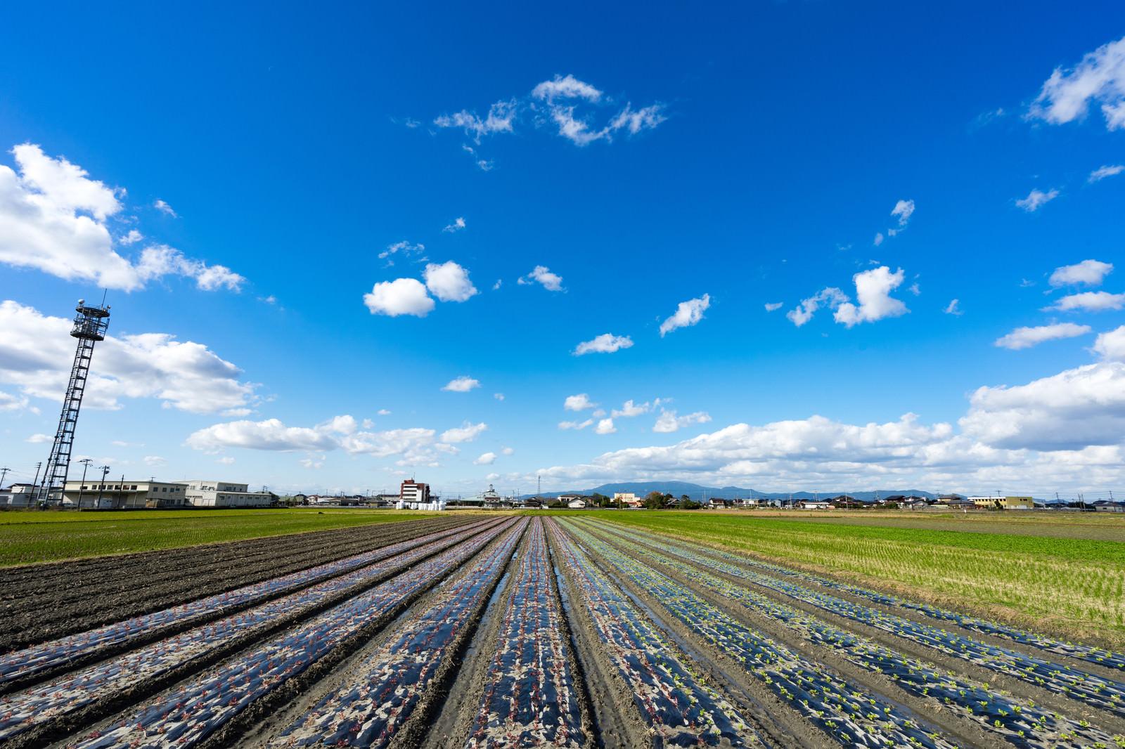 「収穫を終えた畑と大刀洗の青空」の写真