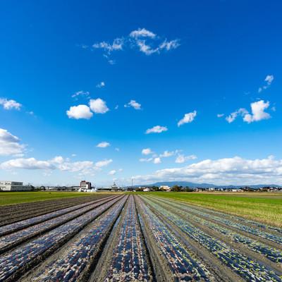 収穫を終えた畑と大刀洗の青空の写真
