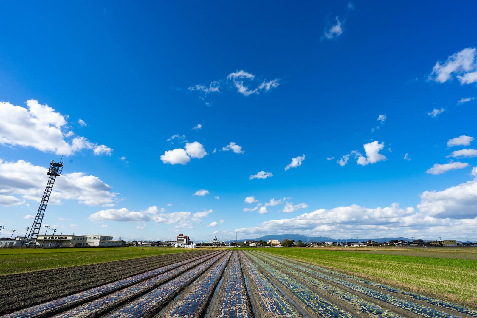 「畑と大刀洗ブルー(青空)」の写真