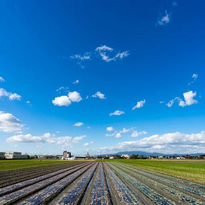 「畑と大刀洗ブルー(青空)」の写真素材