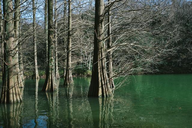 冬の篠栗九大の森の写真