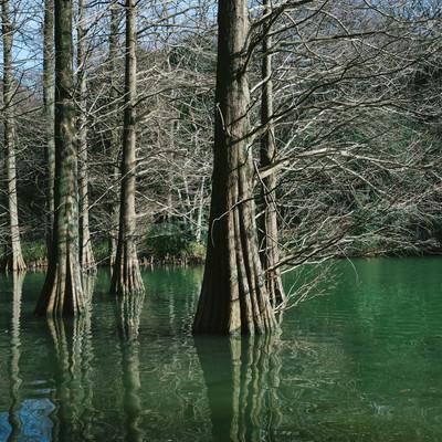 「冬の篠栗九大の森」の写真素材