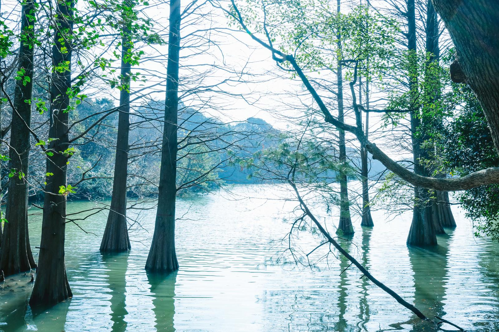 「森林浴に最適な篠栗九大の森」の写真