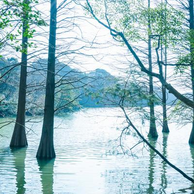 「森林浴に最適な篠栗九大の森」の写真素材
