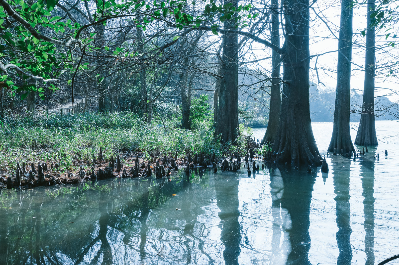 「篠栗九大の森と蒲田池」の写真