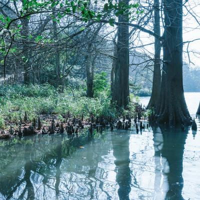 「篠栗九大の森と蒲田池」の写真素材