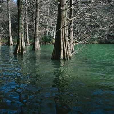 「篠栗九大の森とラクウショウの呼吸根」の写真素材
