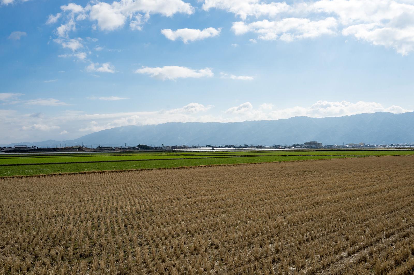 「刈終えた田んぼと大刀洗の平野」の写真