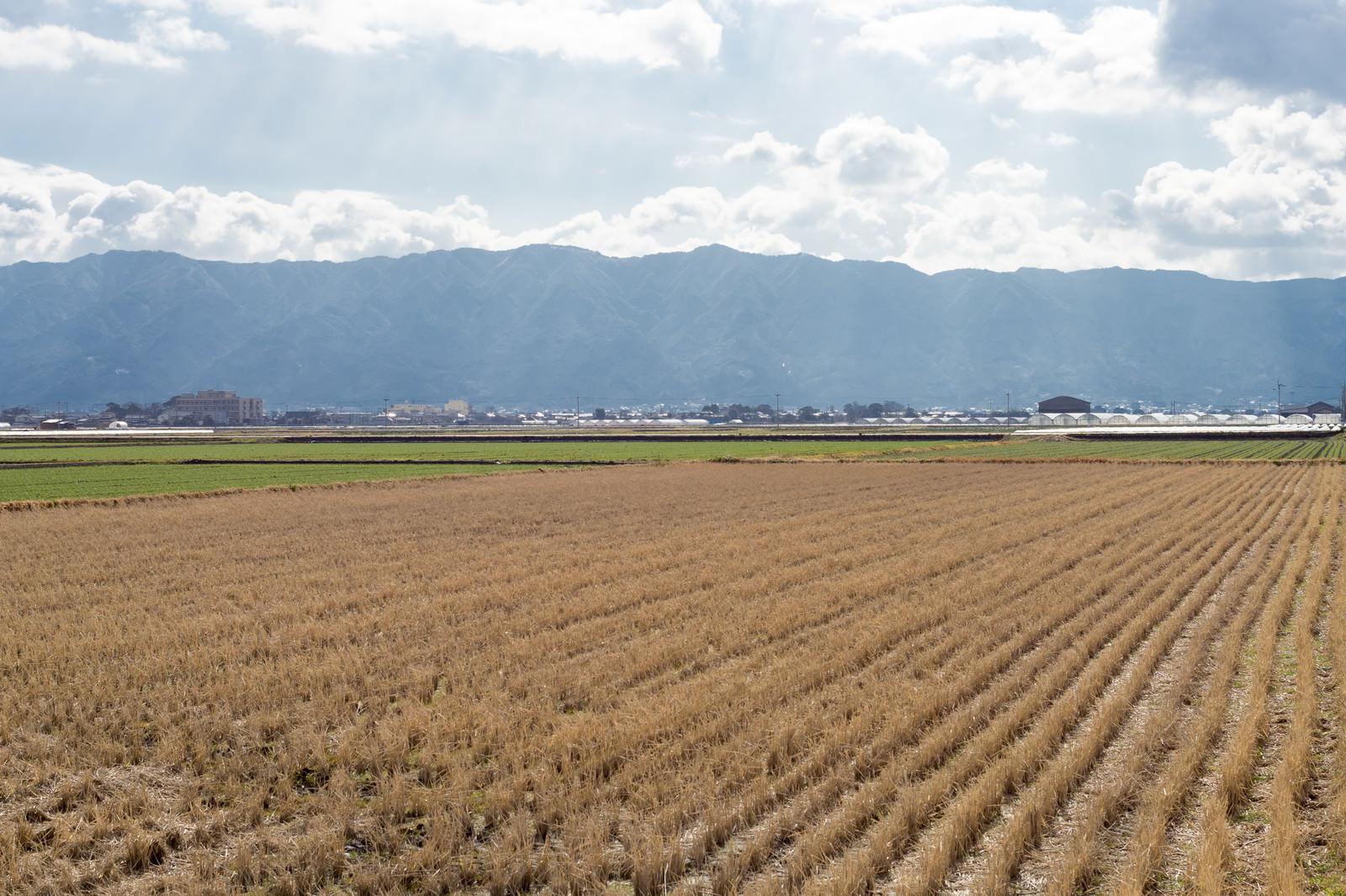 「稲刈りの終った田んぼ(大刀洗町)」の写真
