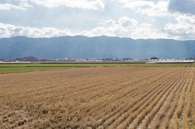 稲刈りの終った田んぼ(大刀洗町)の写真
