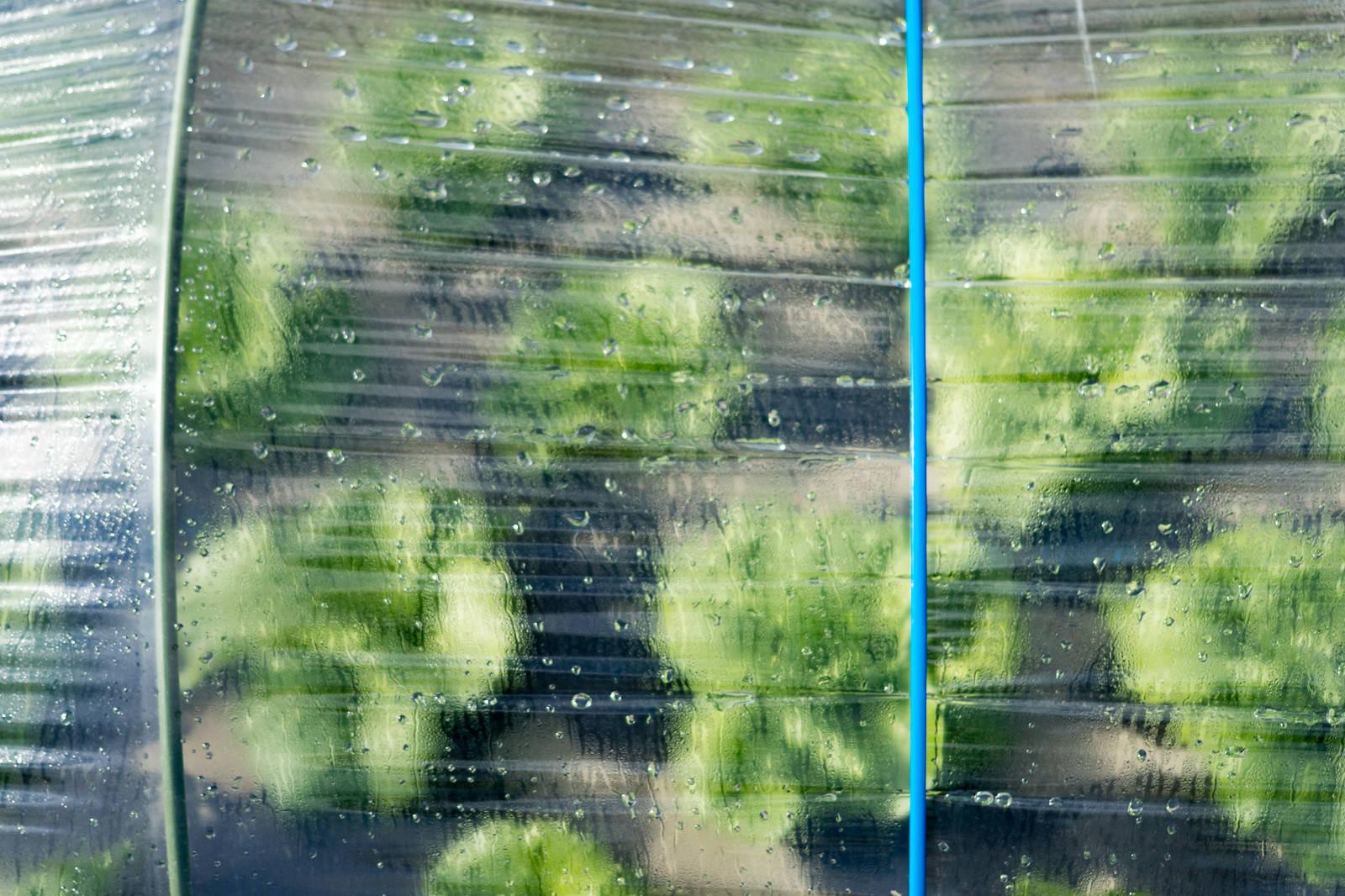 「ハウス越しに見る葉物野菜(大刀洗町)」の写真