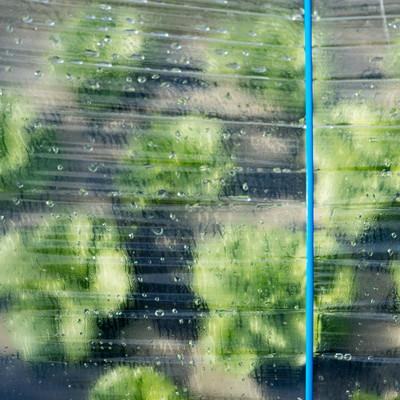 ハウス越しに見る葉物野菜(大刀洗町)の写真