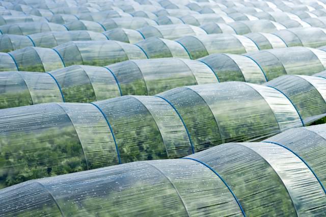 葉物野菜のハウスの写真