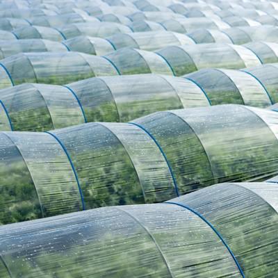 「葉物野菜のハウス」の写真素材