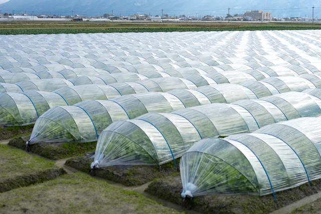 ビニールハウス栽培の畑(大刀洗町)の写真