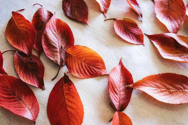 和紙の上に並べた落葉の写真