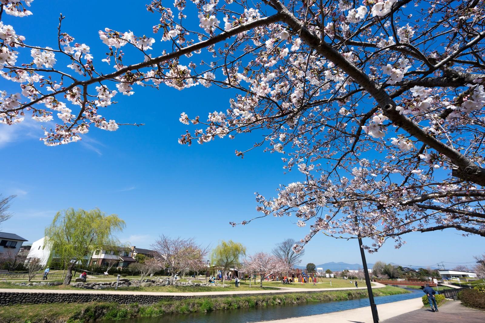 「大刀洗公園の春 | 写真の無料素材・フリー素材 - ぱくたそ」の写真