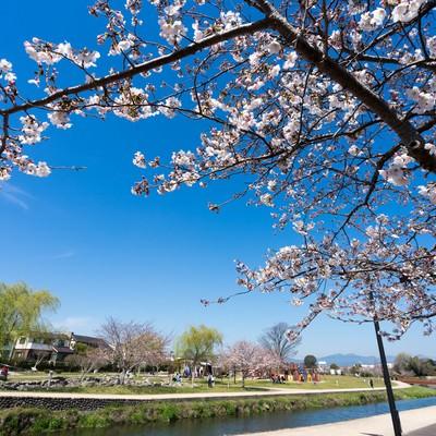 「大刀洗公園の春」の写真素材