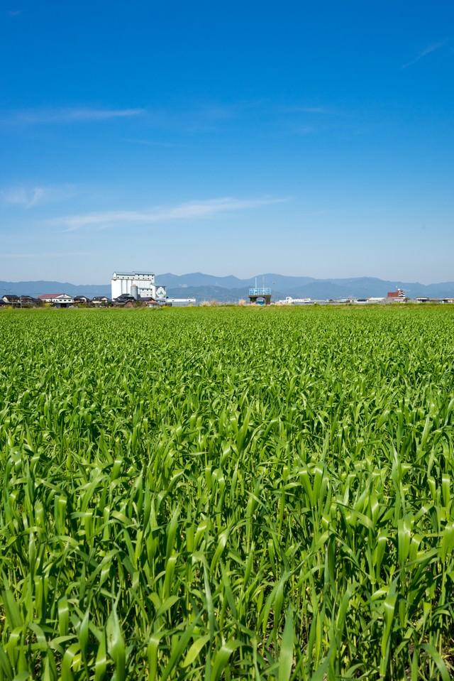 緑が増えてきた大刀洗の春の写真