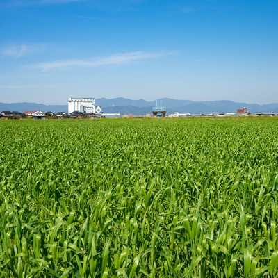 「緑が増えてきた大刀洗の春」の写真素材