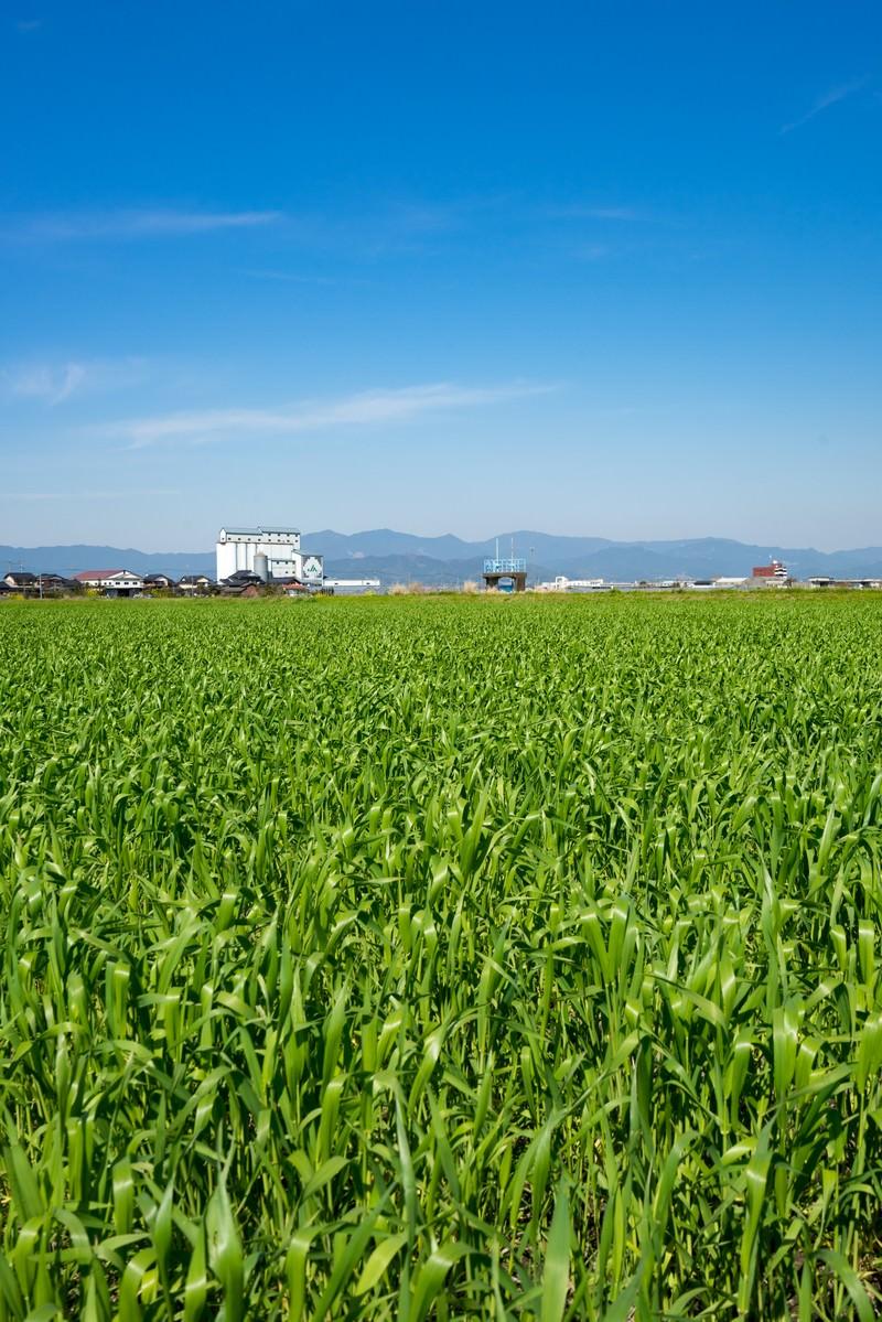 「緑が増えてきた大刀洗の春 | 写真の無料素材・フリー素材 - ぱくたそ」の写真