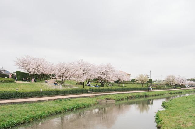 大刀洗公園で花見をする人たちの写真
