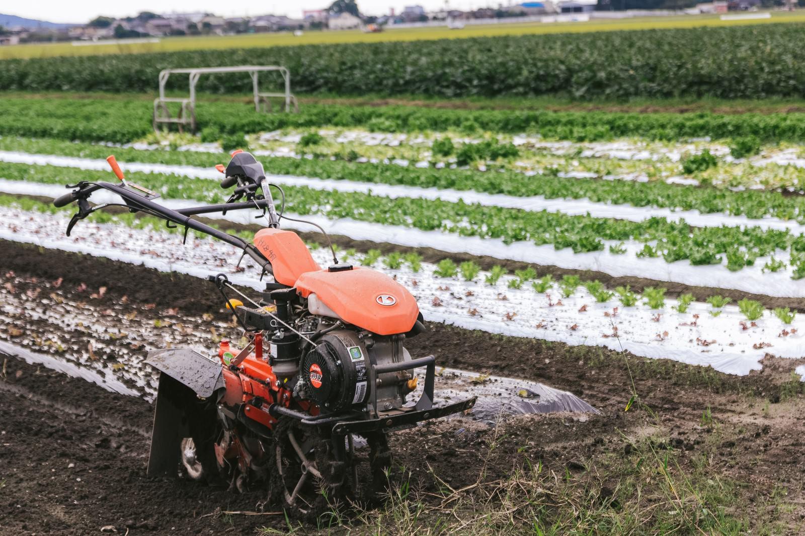 「サニーレタス畑と耕うん機」の写真