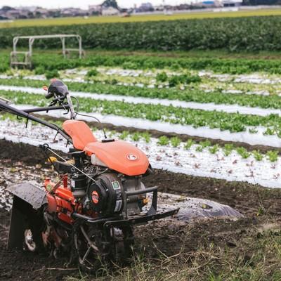 「サニーレタス畑と耕うん機」の写真素材
