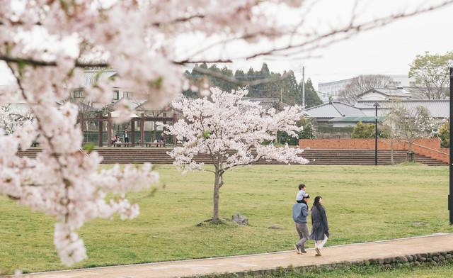 桜の季節に散歩する家族の写真