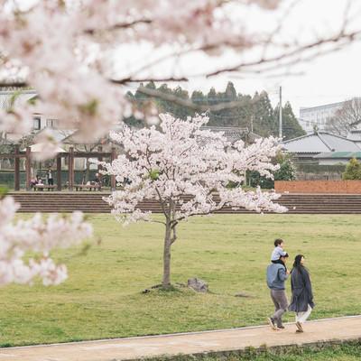 「桜の季節に散歩する家族」の写真素材