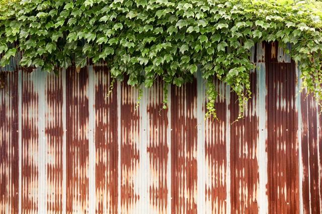 錆びたフェンスと蔦の写真