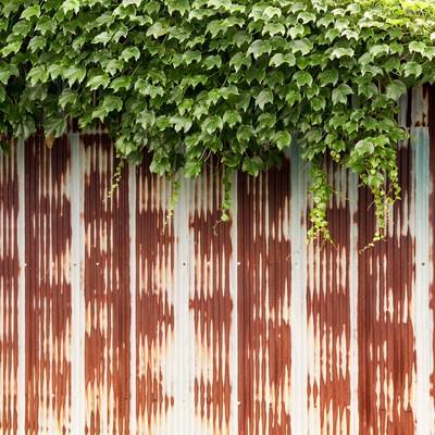 「錆びたフェンスと蔦」の写真素材