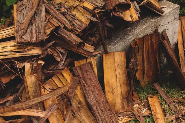 散らばった樹皮の写真