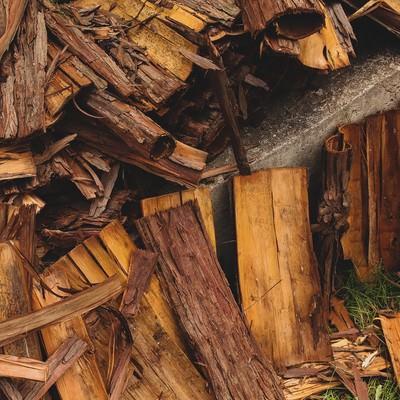 「散らばった樹皮」の写真素材