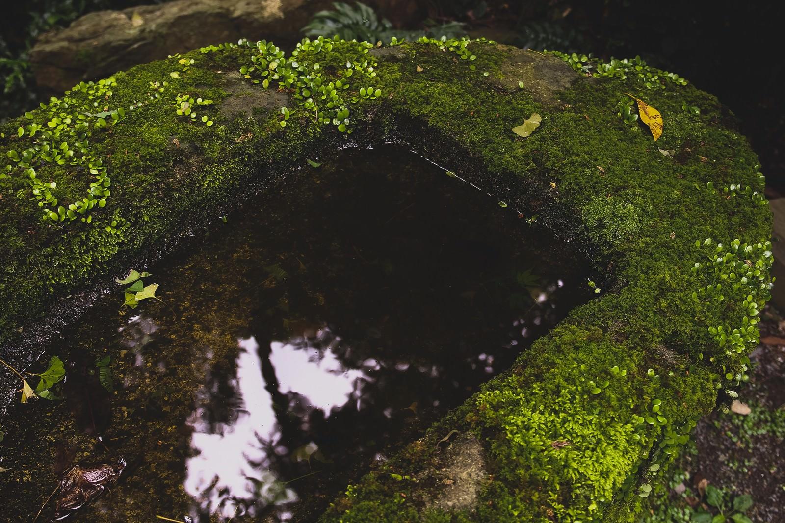 「手入れされていない手水場手入れされていない手水場」のフリー写真素材を拡大