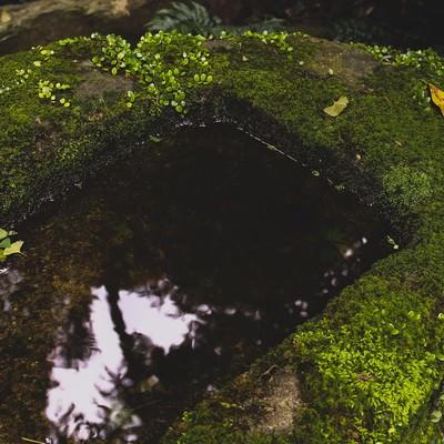 「手入れされていない手水場」の写真素材