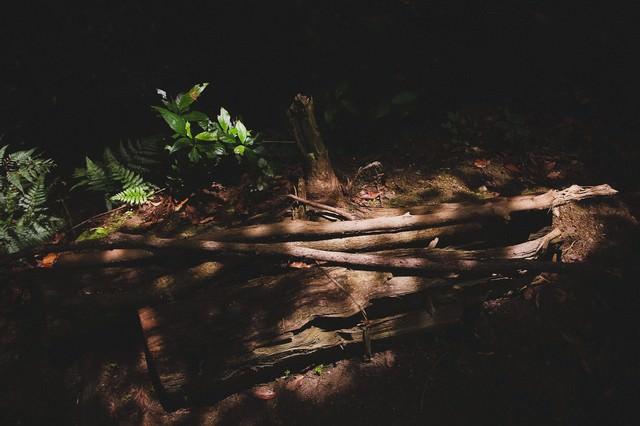放置された木材の写真