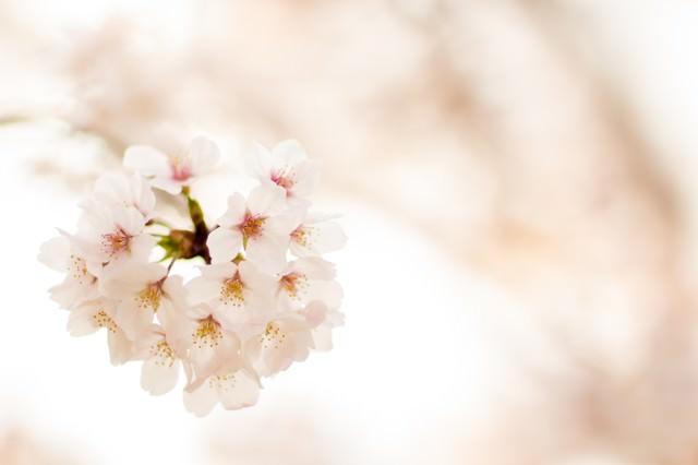 春の訪れの写真