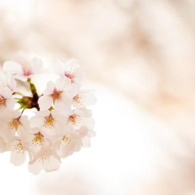 「春の訪れ」の写真素材