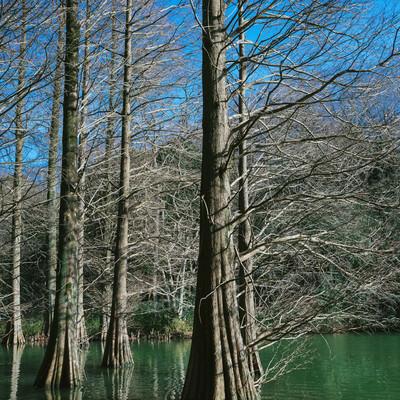 「池に浮かぶ巨木(篠栗九大の森)」の写真素材